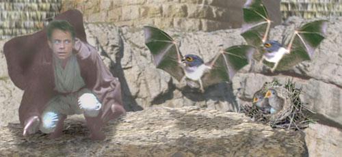 Luke disturbs a nest of hawk-bats near the base of the Hutt castle tower. Artwork by Nat.